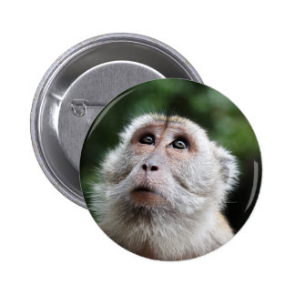 Monkey looking to the heavens button