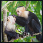 """Monkey Love Napkin<br><div class=""""desc"""">Two adorable monkeys care for one another in the branches of Manuel Antnio,  Costa Rica.  How cute are they?!</div>"""