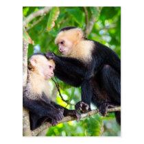 Monkey Love Postcard