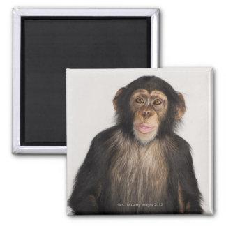 Monkey Fridge Magnets