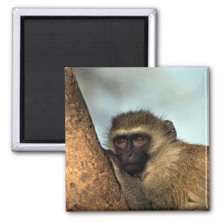 Monkey Magnet