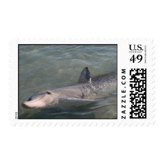 Monkey Mia Dolphin Postage Stamps