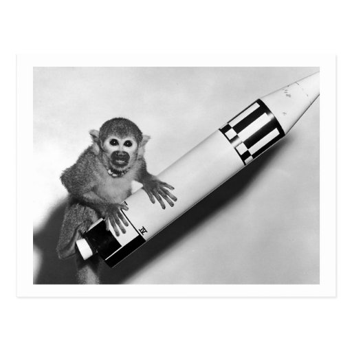 Monkey - NASA - 1950s Postcard