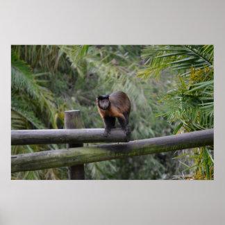 monkey on railing sad primate print