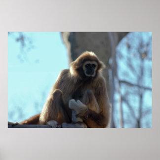 Monkey Photo Poster
