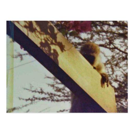 monkey_playing_peekaboo_at_keekorok_lodge_postcard-r81a8a34e10a246d3b951eebd58b8b4d3_vgbaq_8byvr_512 - I am the watcher - Introduce Yourself