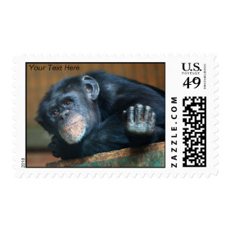 Monkey Postage Stamp