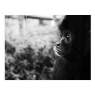 Monkey Postcards