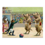 Monkey Ringmaster and Circus Pigs Postcard