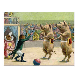 Monkey Ringmaster and Circus Pigs Postcard