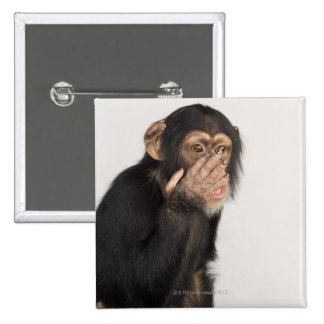 Monkey rubbing its face pinback buttons