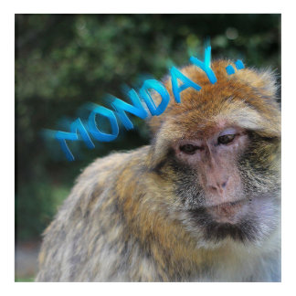 Monkey sad about monday acrylic print