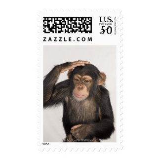 Monkey scratching its head postage