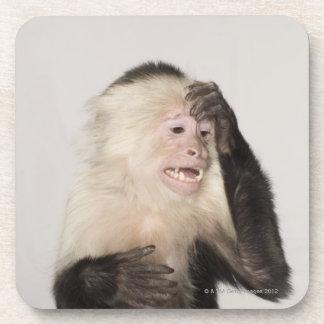 Monkey scratching itself coasters