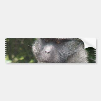Monkey See, Monkey Do Bumper Sticker Car Bumper Sticker
