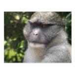 Monkey See, Monkey Do Postcard