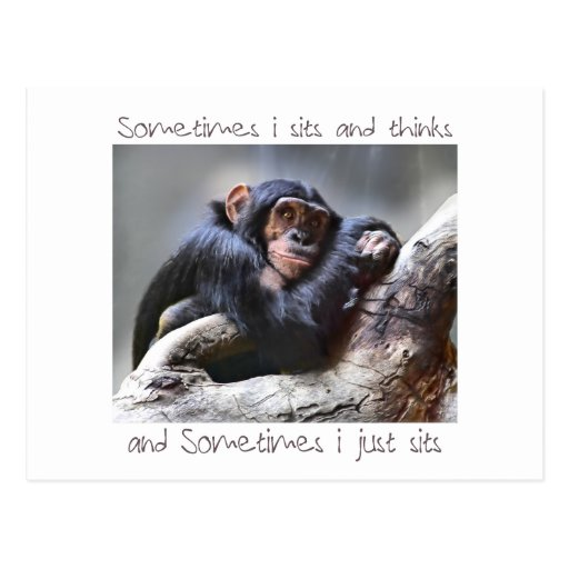 Monkey Sits Post Cards