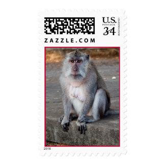Monkey Stamp 29 cents