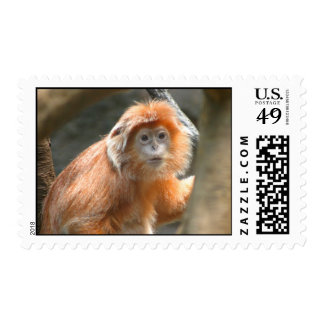 Monkey Stamps