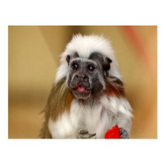 monkey tamarin wait for love postcard