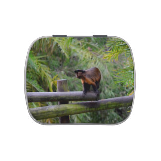 monkey turned away on railing jelly belly candy tin
