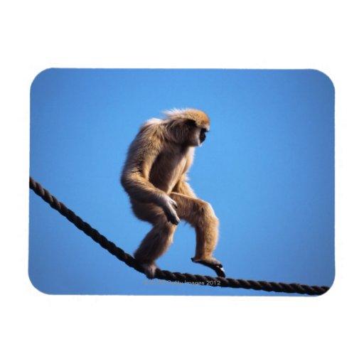 Monkey Walking On Rope Flexible Magnets Zazzle