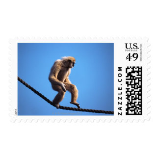 Monkey walking on rope postage stamps
