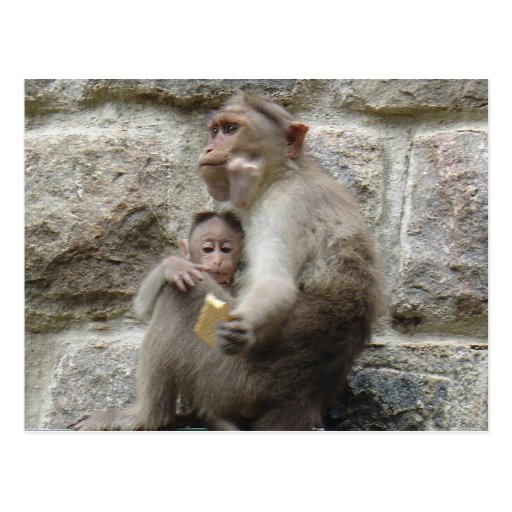 Monkey wants a cookie post cards