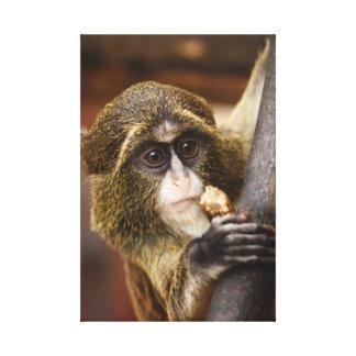 Monkey Watch Canvas Print