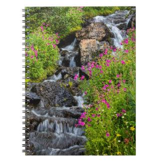 Monkeyflowers Along Lunch Creek In Glacier Notebook