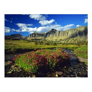 Monkeyflowers at Logan Pass in Glacier National Postcard