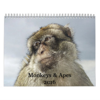 Monkeys and Apes 2016 Calendar