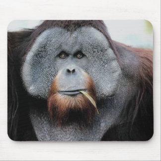 Monkeys apes primates 1 mouse pad
