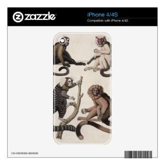 Monkeys (colour litho) iPhone 4 skin