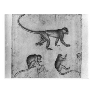 Monkeys, from The Vallardi Album Postcard