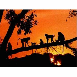 Monkeys In The Sun Cutout