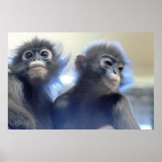 Monkeys Photo Poster