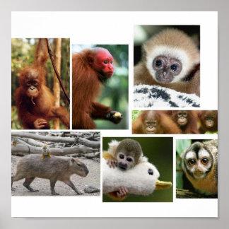 monkeys! poster
