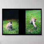 Monkeys Print