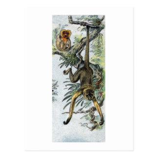 Monkeys - spider & tamarin postcard