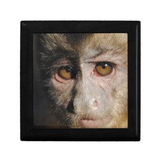 Monkipoe Monkey - Capuchin Keepsake Box
