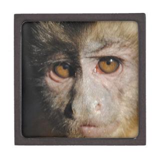 Monkipoe Monkey - Capuchin Premium Keepsake Boxes
