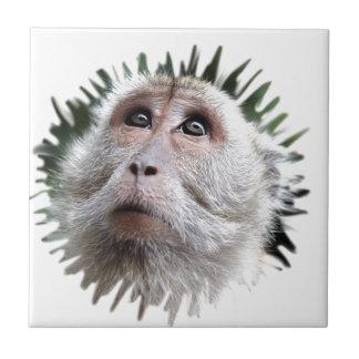 mono adorable azulejo cuadrado pequeño