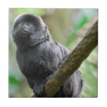 Mono adorable de Goeldi Tejas