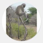 Mono africano en el parque de Krueger, Suráfrica Etiquetas Redondas