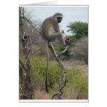 Mono africano en el parque de Krueger, Suráfrica Felicitacion