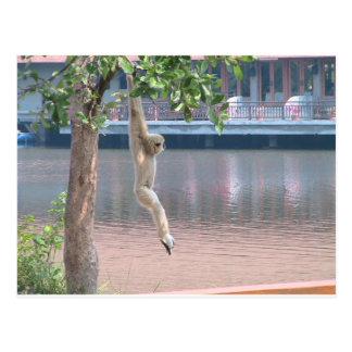 Mono apenas que cuelga alrededor tarjeta postal