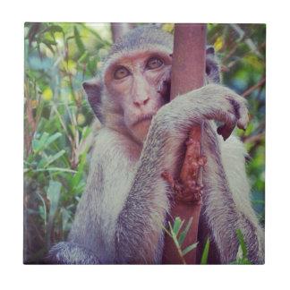 Mono Azulejos Ceramicos