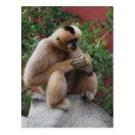 mono blanco tarjeta postal