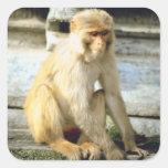 Mono Calcomanía Cuadradas Personalizadas